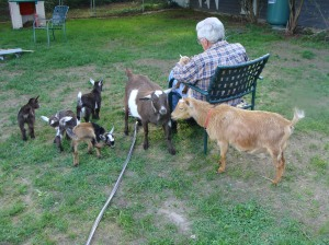 goats may 045