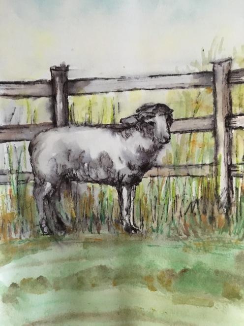 4 -H Sheep 5x7 $50