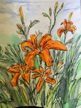Day lilies 5x7 $40